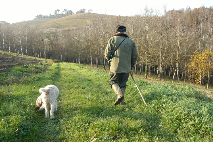 Truffles and truffle hunters.