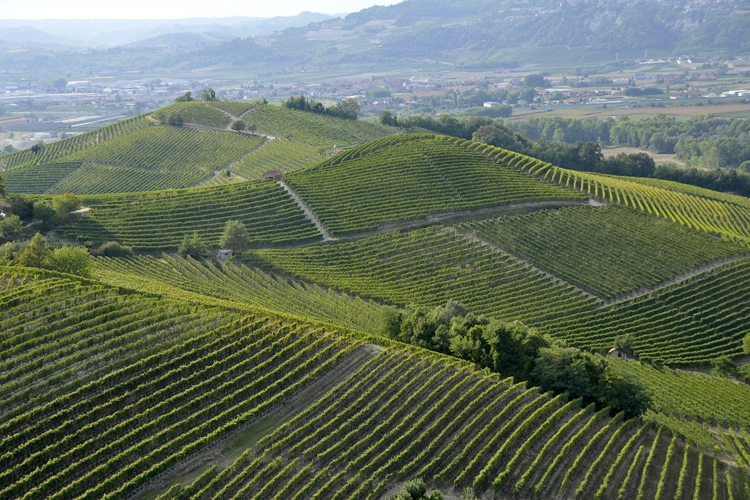 Unesco vineyard landscape - World Heritage.