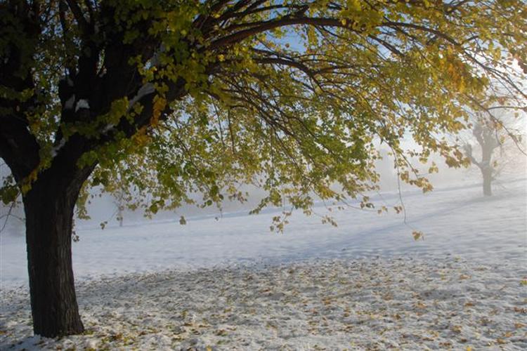 Uceline - Quando l'autunno entra nell'inverno.
